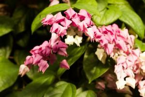 20140612-8729-ML*-Botanischer Garten
