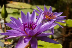 20140612-8731-ML*-Botanischer Garten