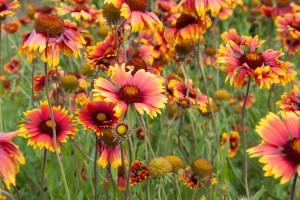 20140612-8770-ML*-Botanischer Garten